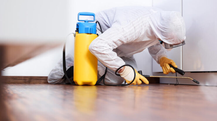 Get Effective Pest Control Solutions To Homeowners And Businesses